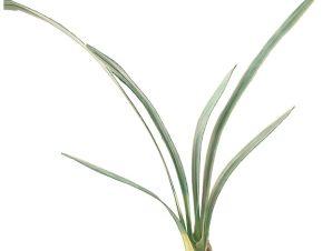Διακοσμητικό μάτσο φύλλα ορχιδέας συμπίντιουμ