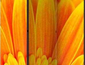 Διαχωριστικό με 3 τμήματα – Yellow gerbera daisies [Room Dividers]